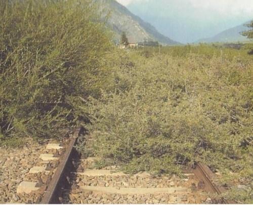 La ferrovia della Venosta negli anni dell'abbandono. Foto © Carmen Müller, tratta dalla tesi