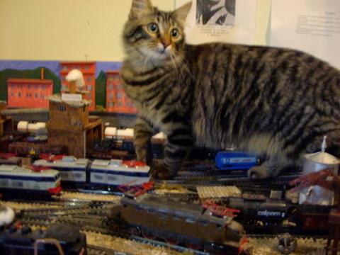 Il gatto e i trenini - foto da www.baronerosso.it