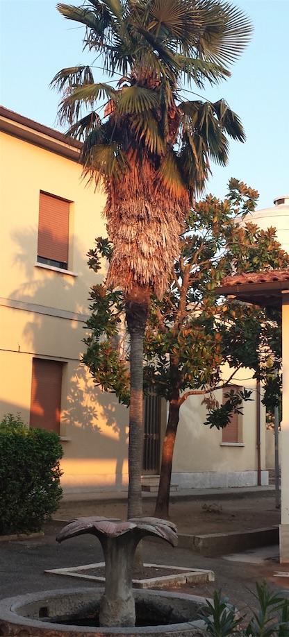 Palme e magnolie